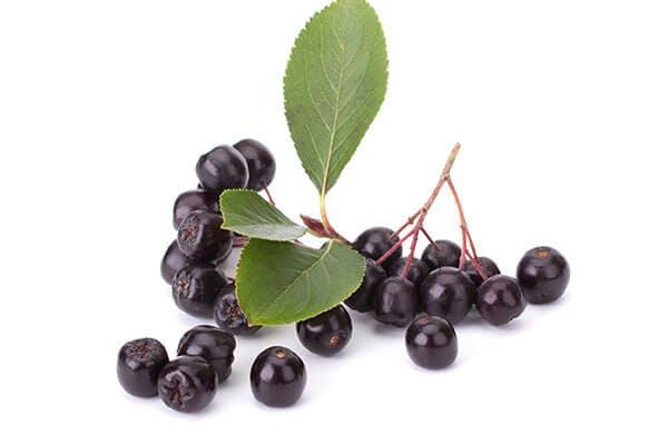 organic aronia berry