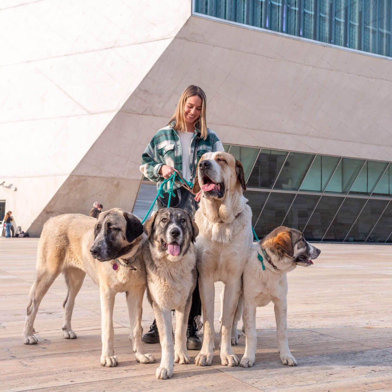 Rapariga com 4 cães de gado transmontano