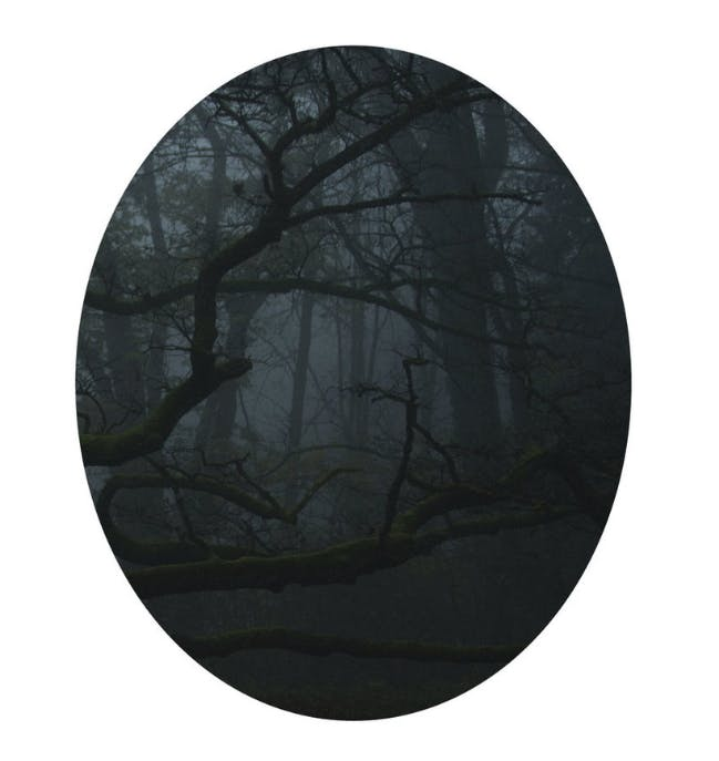 "Karen Irmer, ""Mirrors: Wood"", Laserprint (10+1)/Aludibond, 2014/17 | Foto: Zweigstelle Berlin"