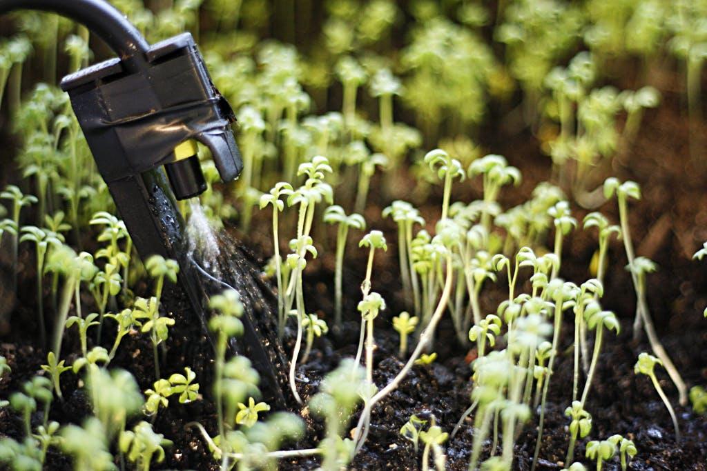 Meet Eater Plant Watering