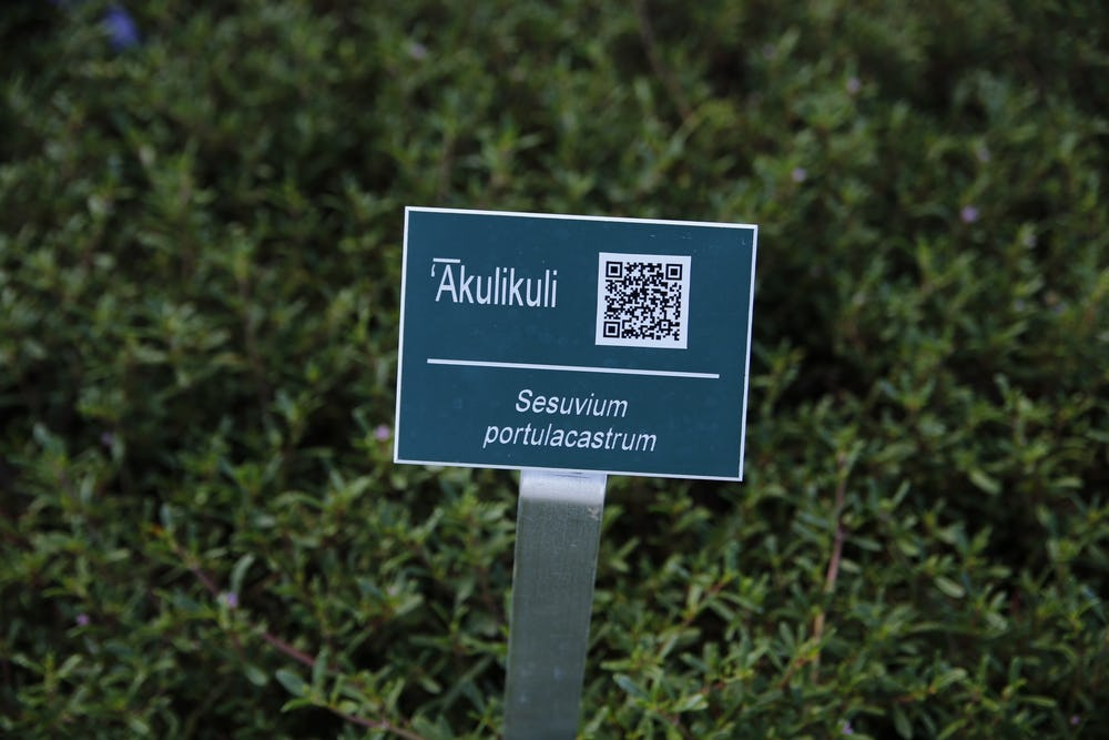 Signage providing plant description and QR code for additional info.