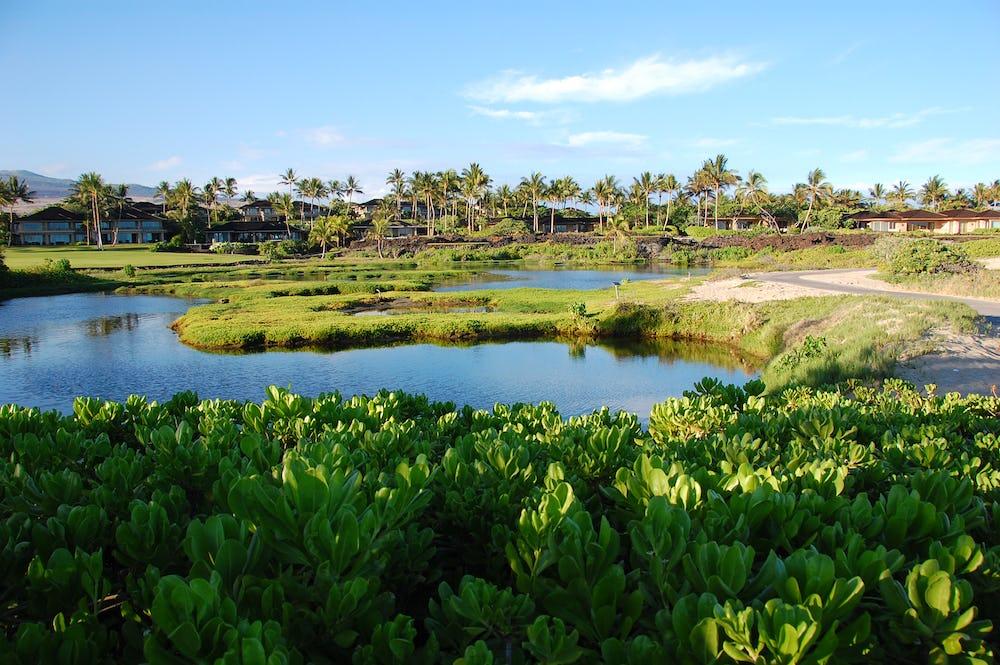Waiakauhi Pond, an anchialine pond