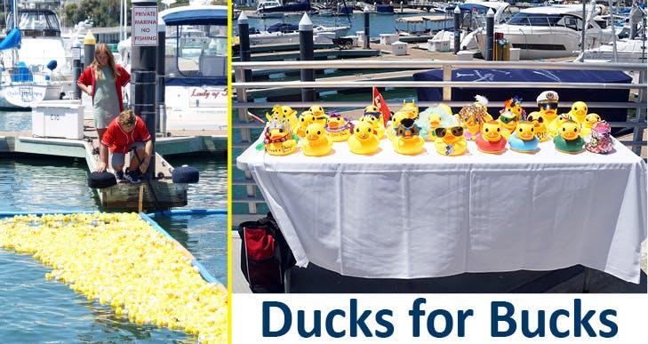 Ducks for Bucks
