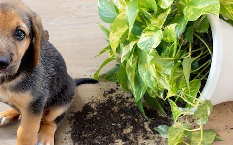 Plantas aptas para mascotas