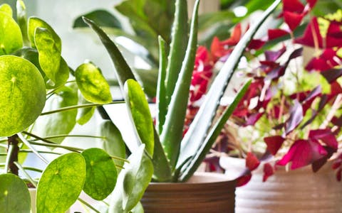 Qué necesita tu planta para vivir: Cómo se alimentan y viven las plantas