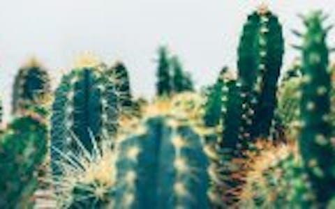 Plantas que dan mala suerte… ¡y no lo sabías!