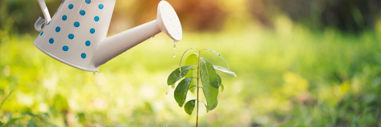 No las dejes morir de sed: Aprende cuando regar las plantas