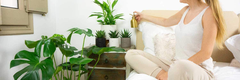 Entretien des plantes d'intérieur en automne