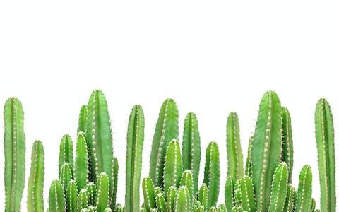 Plantas que necesitan poca agua