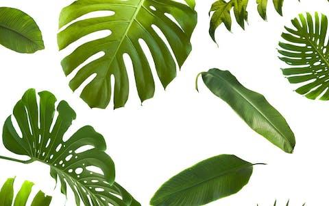 ¿Pueden las plantas purificar el aire de tu hogar?