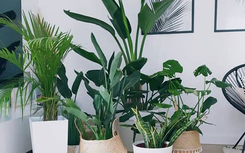 Plantfluencer: Cristina Usó