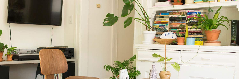 Cómo decorar tu salón con plantas