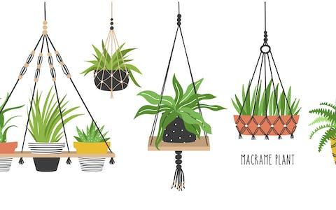 Plantas que da buena suerte tener en casa