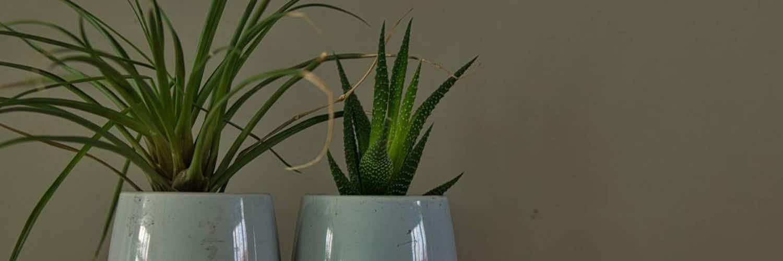 Petites mais costauds : de petites plantes pour tous vos espaces