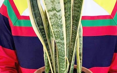 Plantfluencer: Kiko Fernandez
