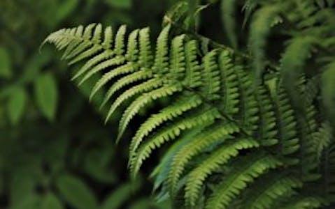 Cómo se reproducen las plantas: tipos e importancia de la reproducción vegetal