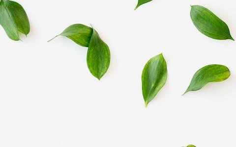 ¿Por qué las plantas son verdes?