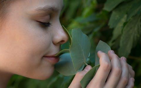 Respira: Plantas que te ayudarán a liberar estrés