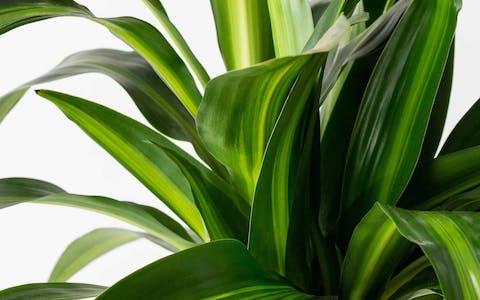 Plantas de interior que necesitan poca luz: Guía útil, consejos, trucos y cuidados