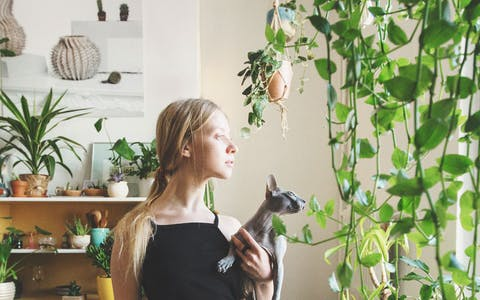 Aferradas a la vida: Plantas fáciles de cuidar