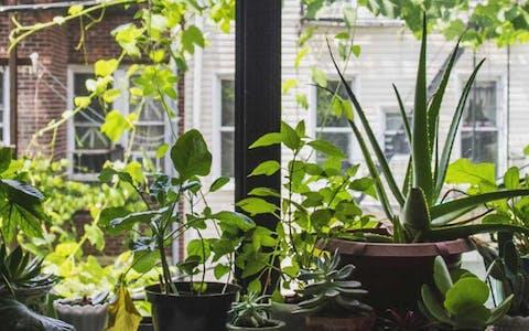Plantfluencer Historias: Lisanne van Duijn