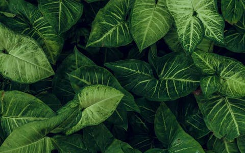 Desde las sombras: 8 plantas que no necesitan luz