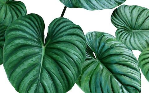 ¿Cómo respiran las plantas?