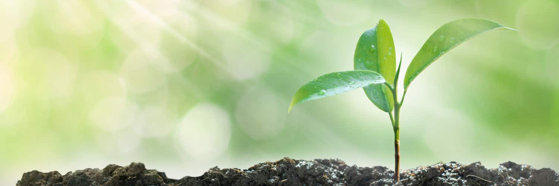 L'avenir, c'est maintenant : pourquoi est-ce génial d'acheter des plantes en ligne ?