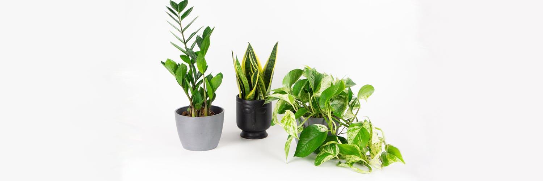 Pequeñas pero poderosas: plantas pequeñas para todos tus espacios