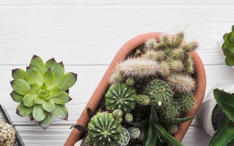 7 plantas que no necesitan riego