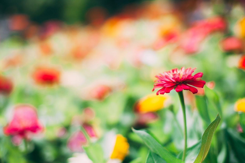 Im Blumengarten