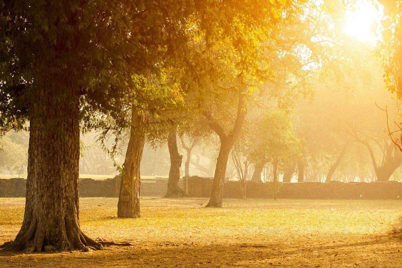 Motiv Romantik unter Bäumen