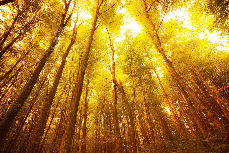 Motiv Herbstwald