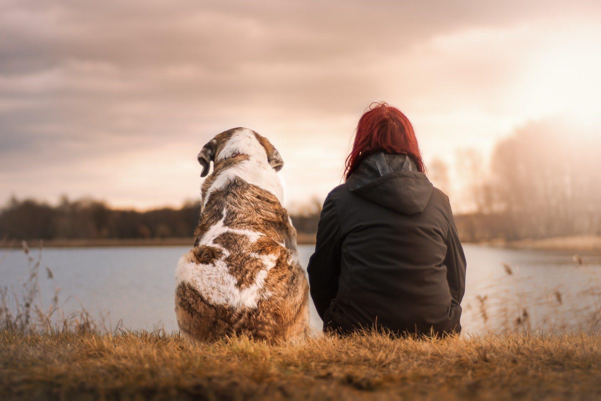 animal retraite adopter