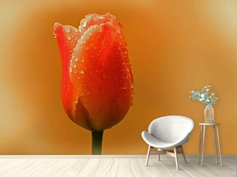 Fototapete Eine Tulpe im Morgentau