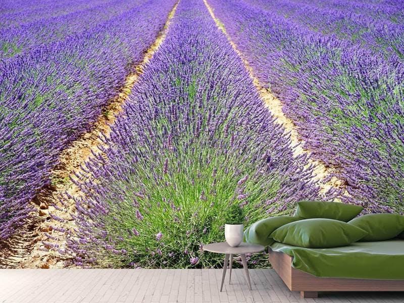 Fototapete Das Lavendel Feld