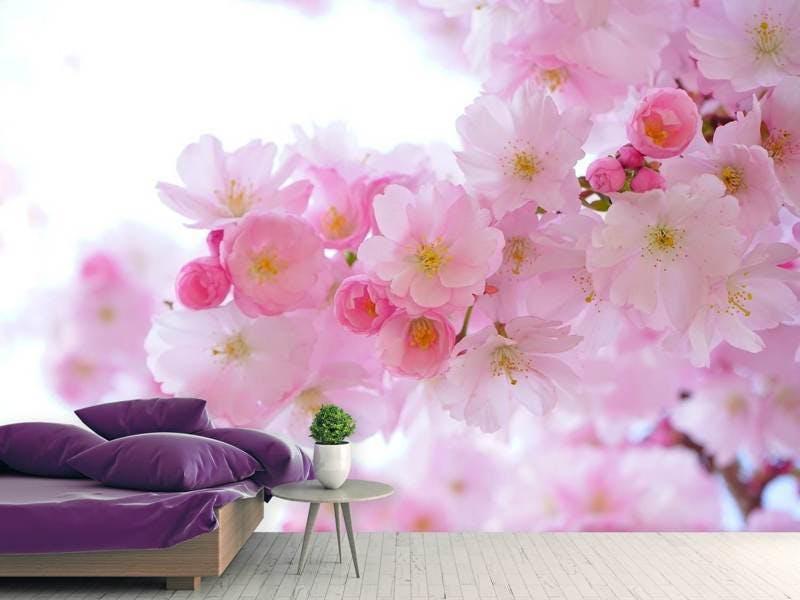 Fototapete Japanische Kirschblüte XL