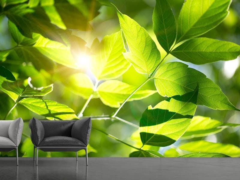 Fototapete Es grünt so grün