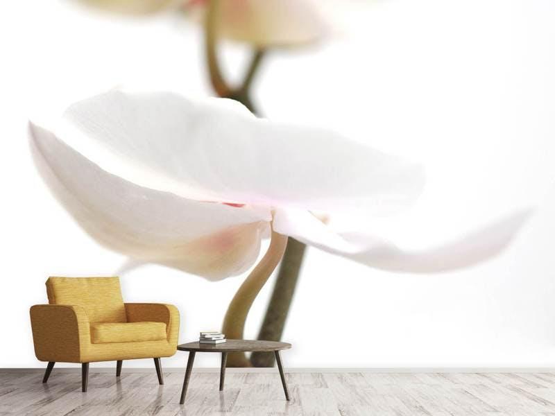 Fototapete XXL Orchideenblüte