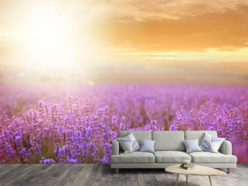 Fototapete Sonnenuntergang beim Lavendelfeld