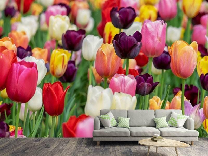 Fototapete Die Farben der Tulpen