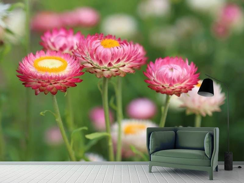 Fototapete Blumen des Frühlings