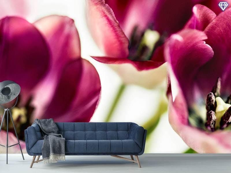 Fototapete Tulip IV