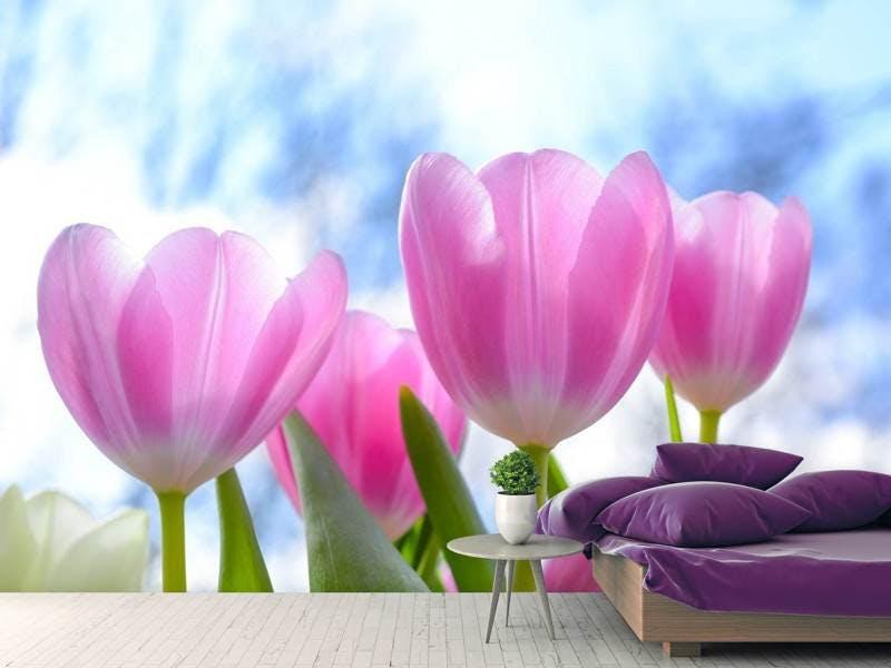 Fototapete Tulpen in der Natur