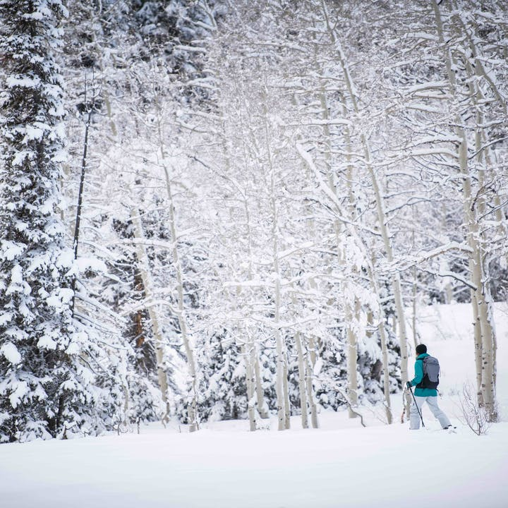 Women snow trekking in an Aspen forest