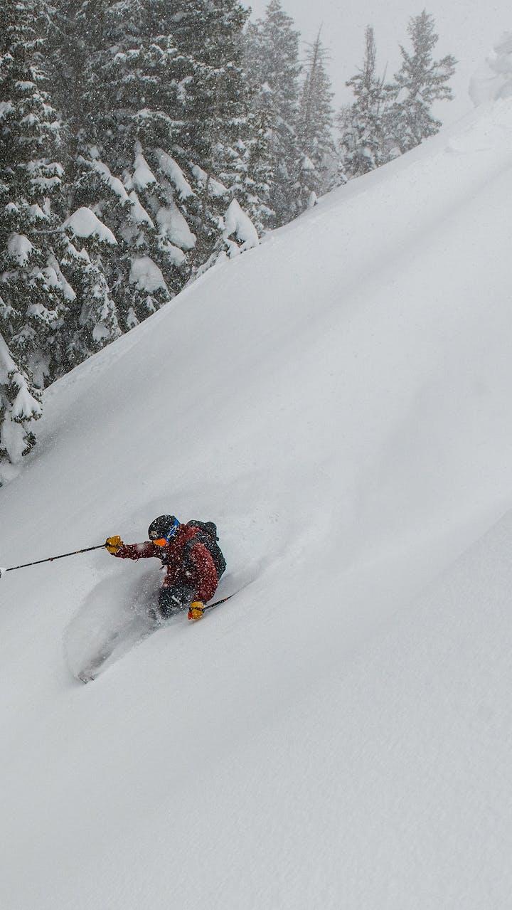 skier skiing in a powder field