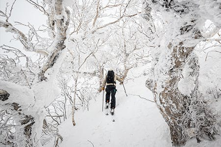Trekking through the snow covered trees