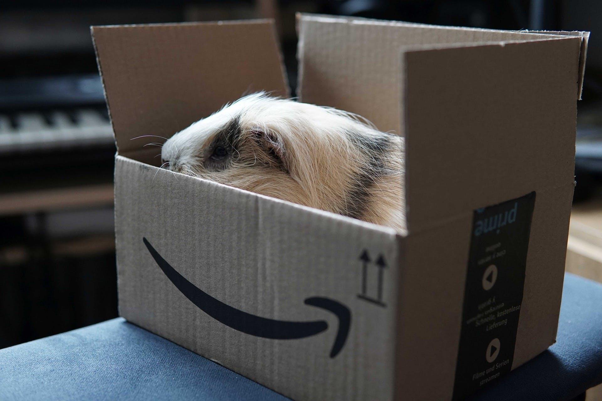 Compras na Amazon: saiba se é seguro comprar no site e no aplicativo, tire suas dúvidas e conheça um pouco mais sobre uma das maiores varejistas da internet.