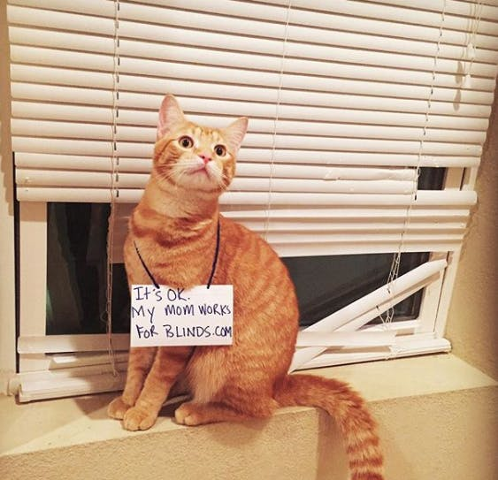 cat in front of broken blinds with sign that says it's ok, my mom works for blinds.com