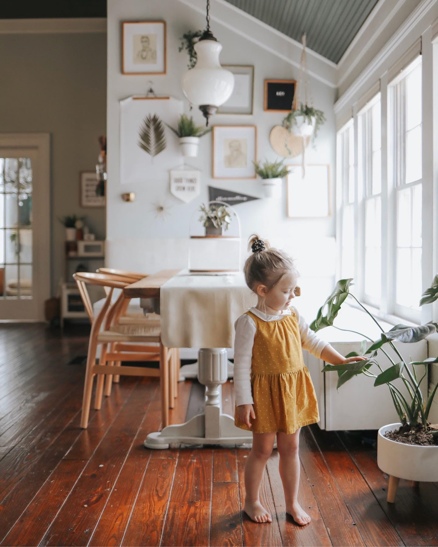 young girl caring for plant in dining room